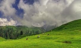 Naran Valley: Verdant Mountain Beauty